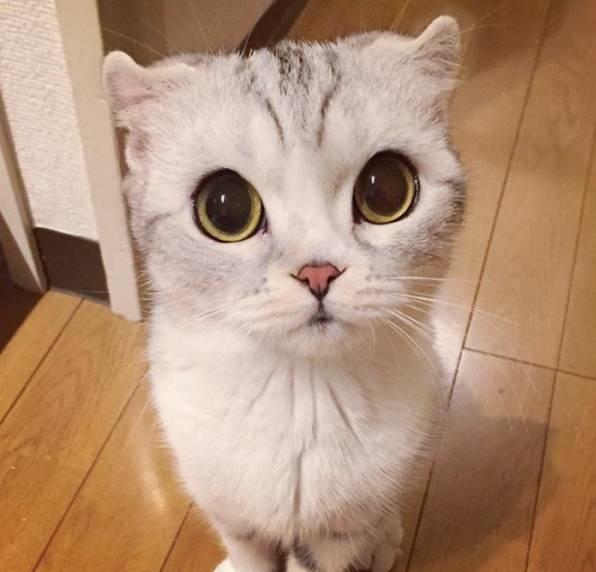 نتیجه تصویری برای بچه گربه سفید
