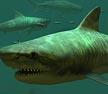 دانلود اسکرین سیور زیبای کوسه ببری Tiger Sharks 3D Screensaver
